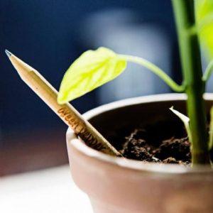 Bloeipotloden (basilicum, cherrytomaat, vergeet-mij-nietje, zonnebloem, tijm, salie)